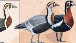 Древноегипетска рисунка на 4600 години разкрива изчезнал вид гъска