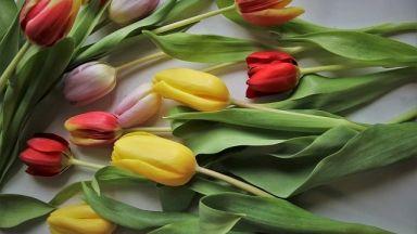 8 март или как да изненадаме любимата си на добра цена