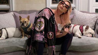 Откраднатите кучета на Лейди Гага бяха предадени в полицията в Лос Анджелис