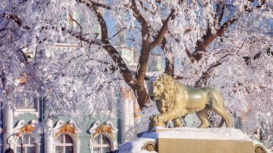 Котките в Ермитажа ще получат своето наследство от френски меценат в края на пролетта
