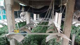 Модерна лаборатория за марихуана е разкрита в луковитското село Румянцево