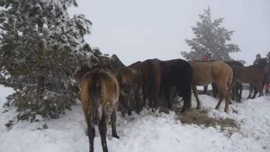 Глобиха собственика на изоставените в Осоговската планина коне с 4500 лева