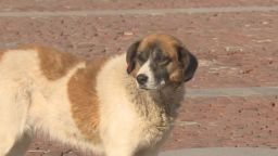 С около 30% са се увеличили изоставените кучета след пандемията