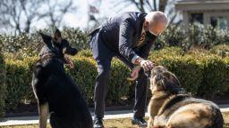 Кучетата на президента Байдън бяха отпратени от Белия дом след инцидент