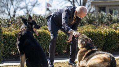 Кучетата на Байдън бяха отпратени от Белия дом след инцидент