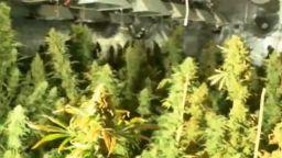 Разкриха модерна оранжерия за отглеждане на марихуана в Шипка