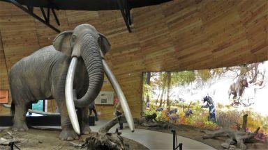 5 музея в България с мамути, мастодонти и други изчезнали видове