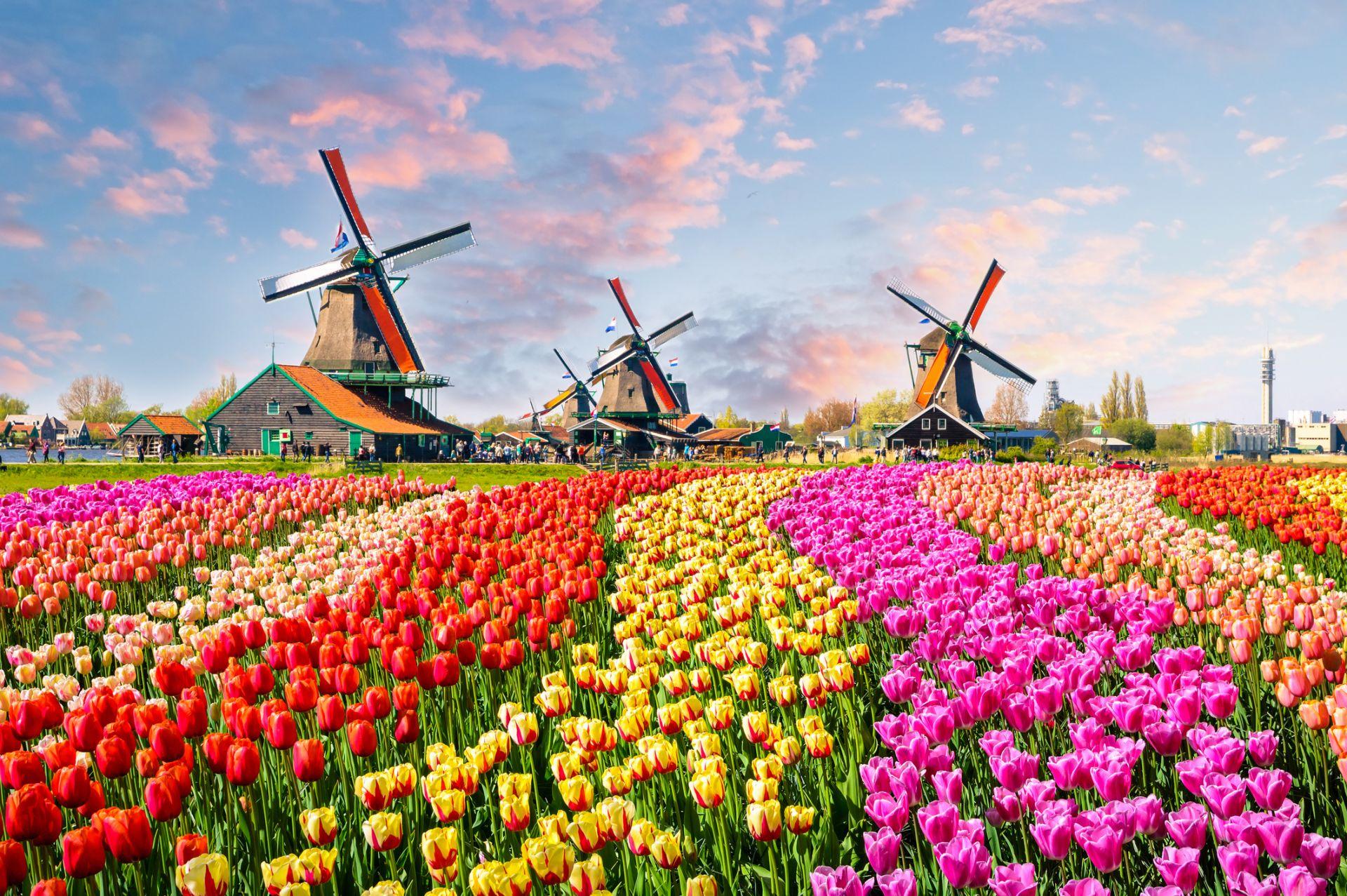 Зансе Сханс, Холандия