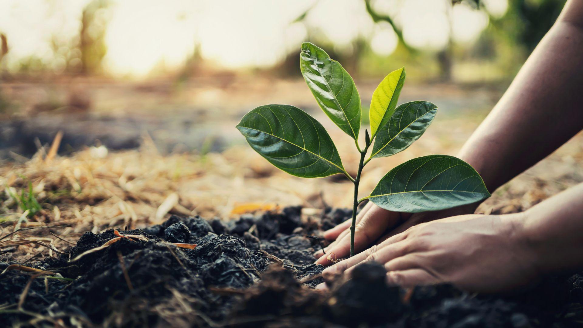 Растителни нашественици навлизат без контрол през интернет търговията