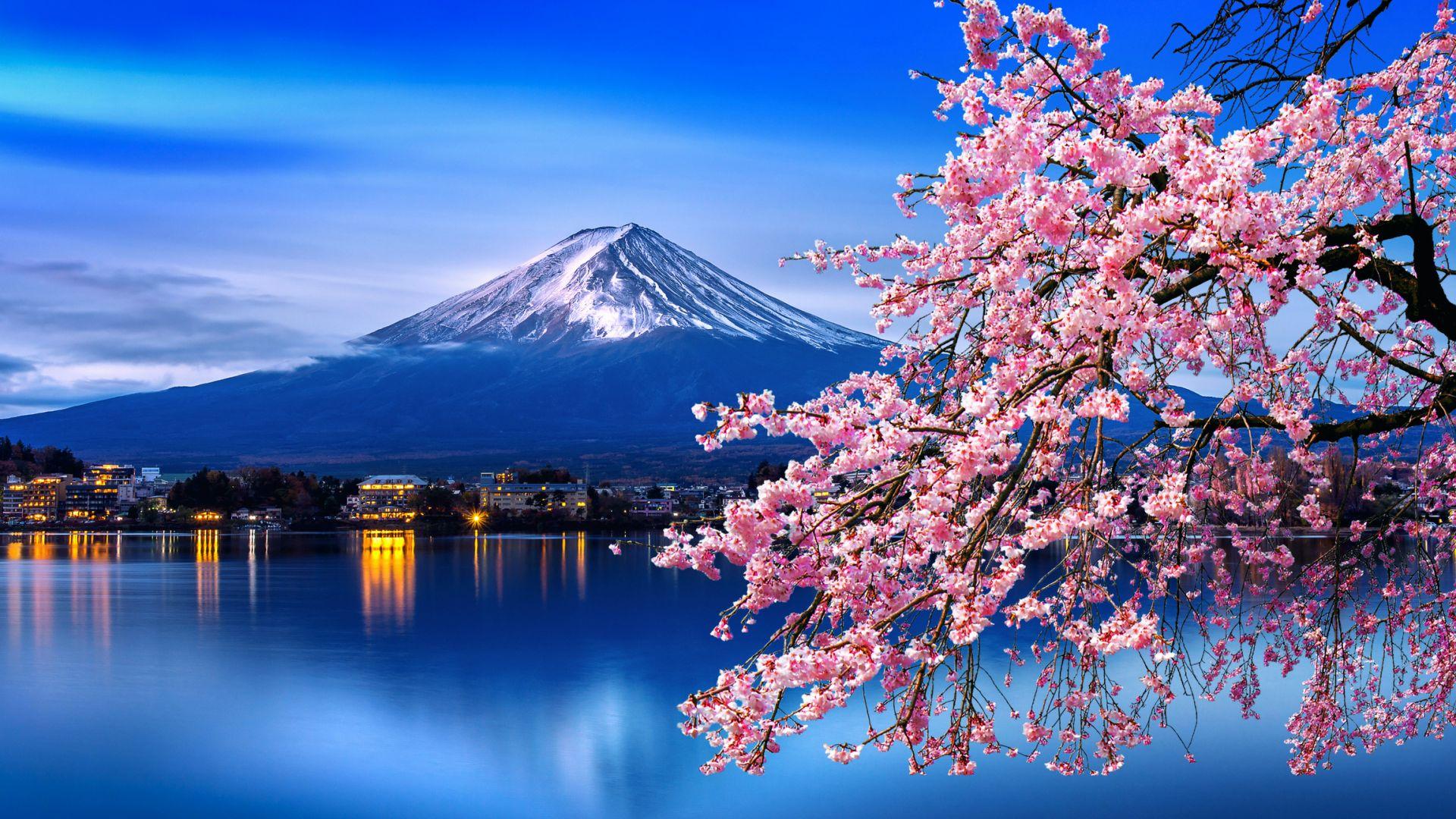 Сакурата цъфна в Япония по-рано от обичайното