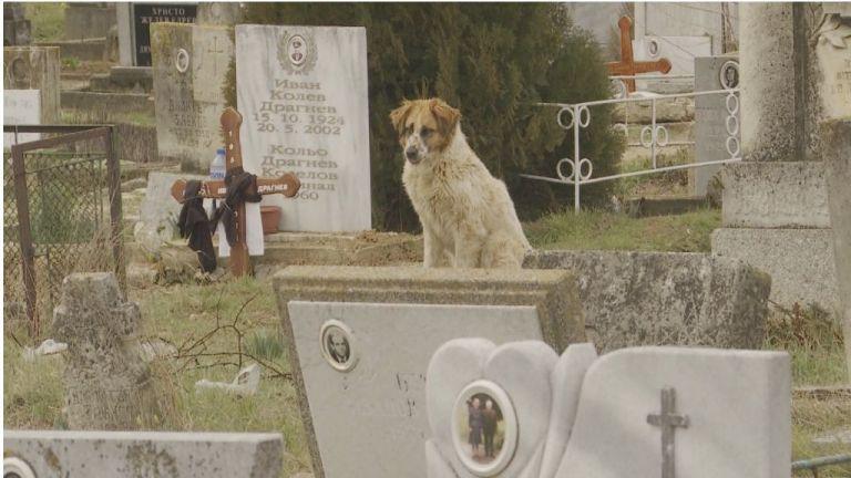 Бездомно куче бди повече от 40 дни до гроба на