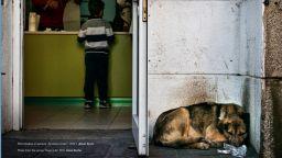"""""""Животът на бездомните животни"""": Драматичност, но и надежда за нов живот"""