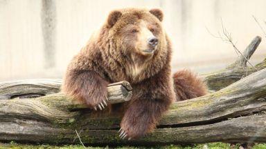 """""""Четири лапи"""": Мечки и лъвове се гледат в лоши условия в зоопарковете"""