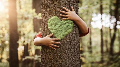 Международен ден на горите: Вижте 3 уникални гори и дървета в България