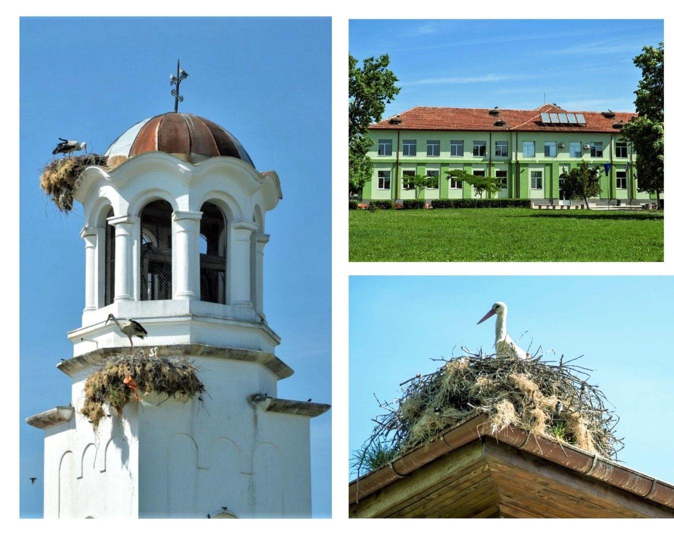 Гнезда има на покрива на православната църква, на училището и по къщите