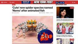 """Нов вид паяк е кръстен на героя от анимацията """"Търсенето на Немо"""""""