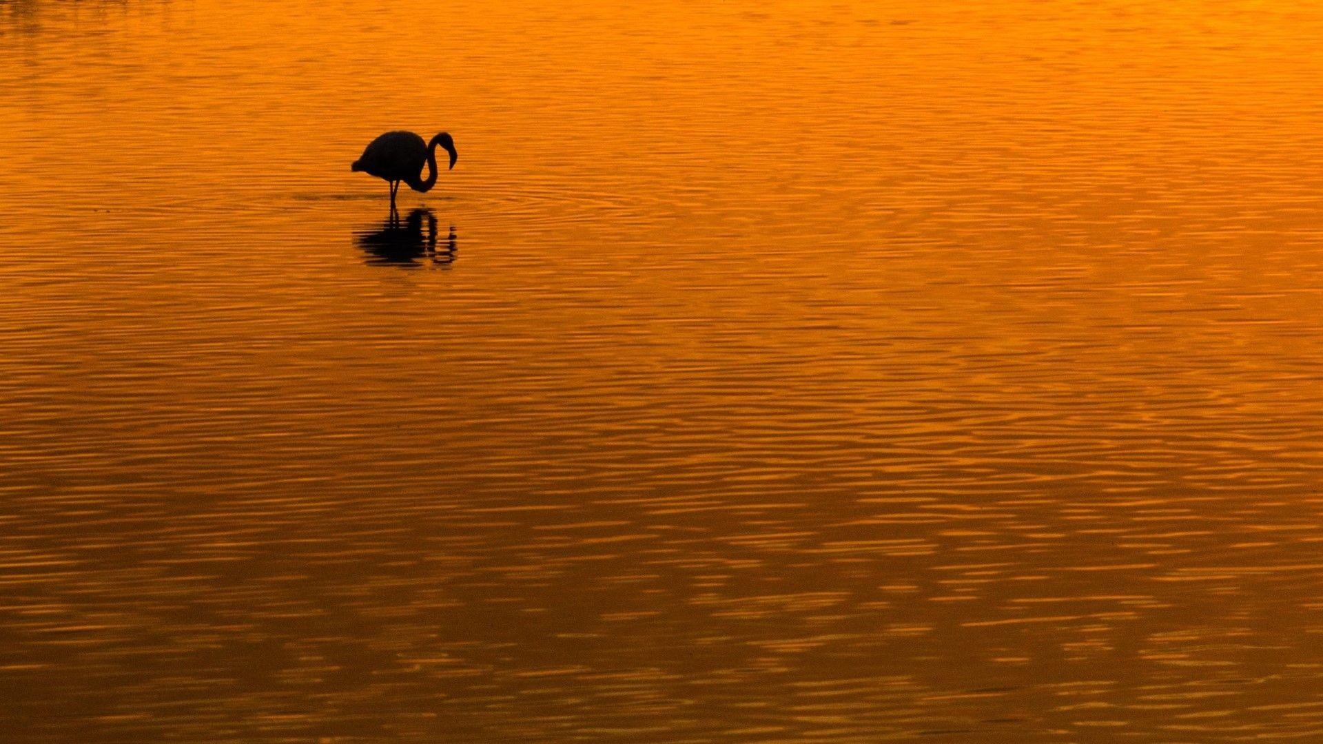 Фламинго по залез в езерото Ороклини