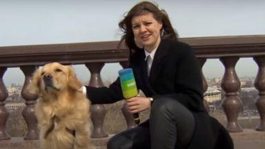 Куче открадна микрофона на репортерка в Москва (видео)