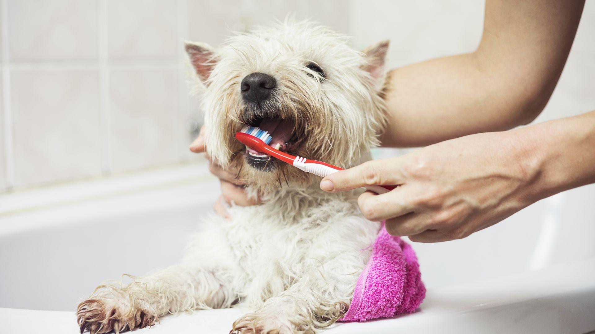 Здрави зъби за хубав живот или как да се отървем от лошия дъх на нашето куче
