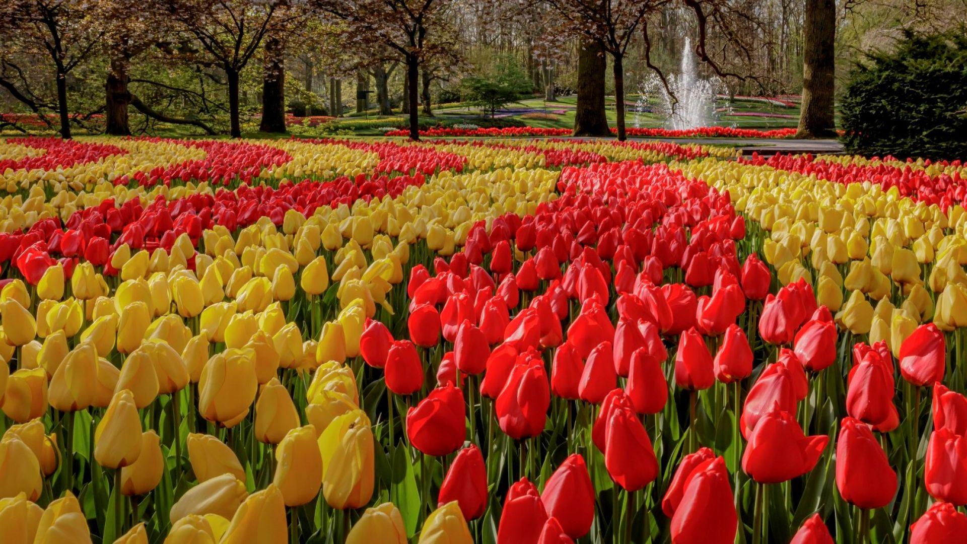 Кукенхоф: най-пищната градина с пролетни цветя в Европа (снимки)