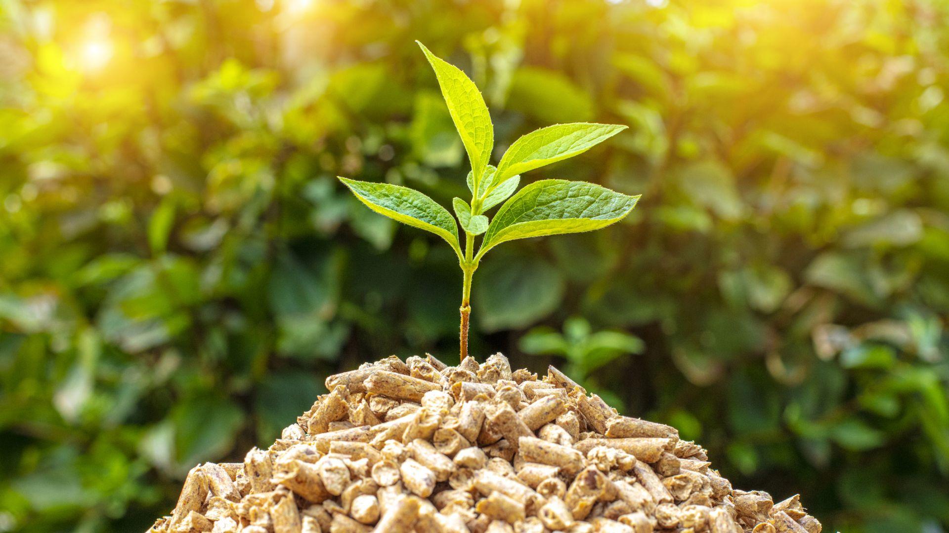 От екологична биомаса можем да произвеждаме достатъчно ток