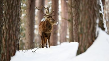 Откриха убит елен край разградско село