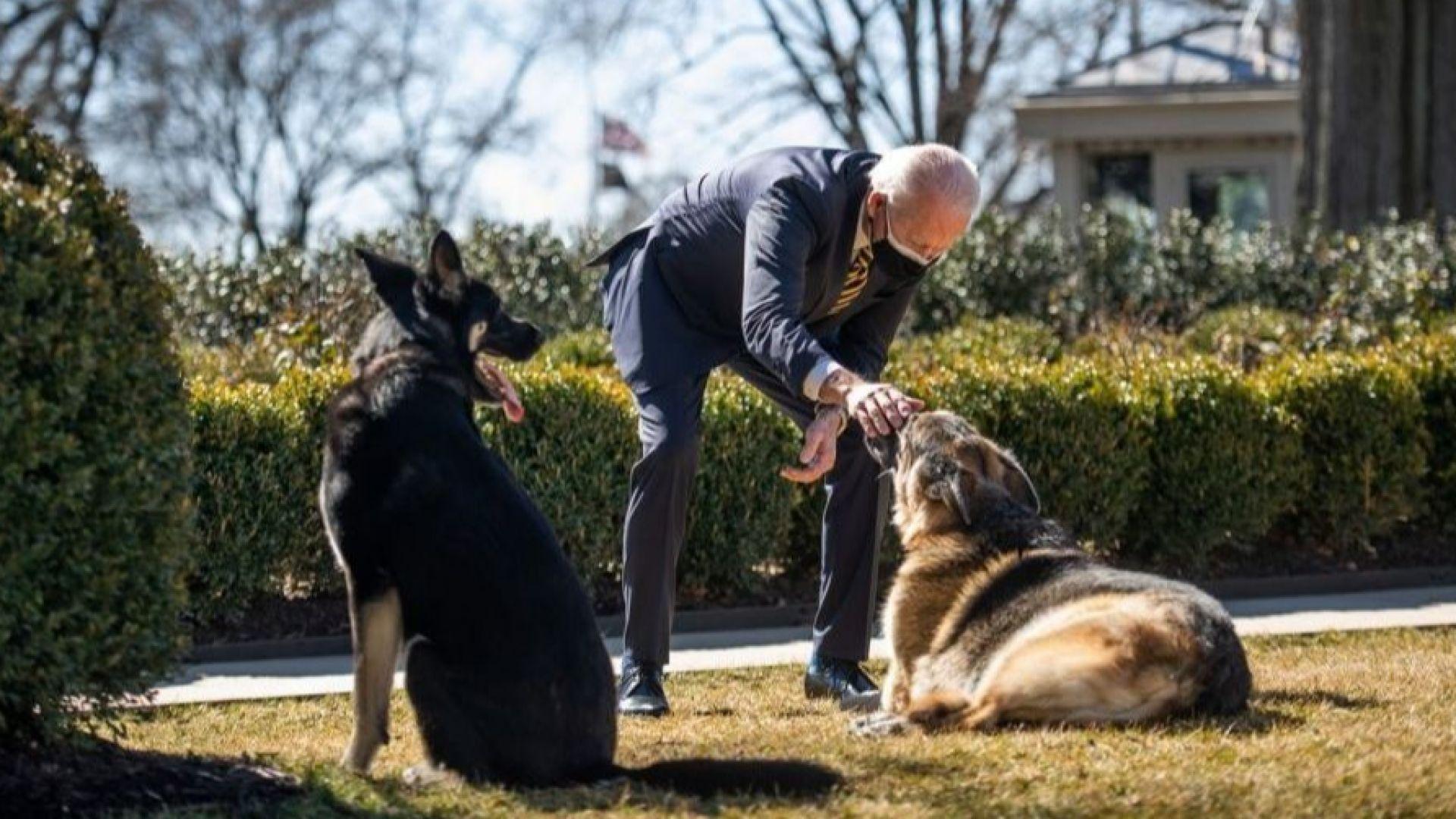 Провинилото се куче на Джо Байдън ще бъде изпратено за дресировка