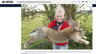 Най-големият заек на света беше откраднат от стопаните си в Англия