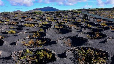 Като на Луната: вулканичните лозя на остров Лансароте