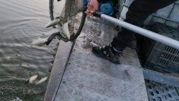 Зарибиха с 5000 каракуди езеро край Русе