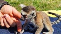 Бейби бум и нови обитатели в зоопарка в Бургас (снимки)