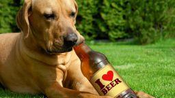 Пивоварна плаща 20 хил. долара за куче-дегустатор на бира за шаровци