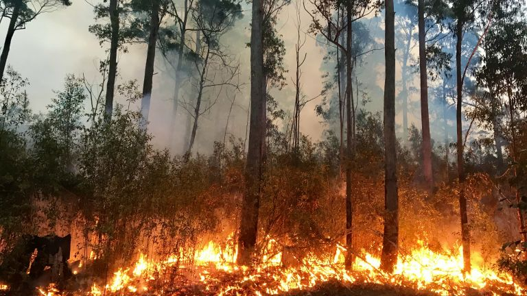 Горски пожар унищожи исторически сгради в Южна Африка, с стотици