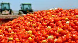 България внася много повече домати, отколкото банани