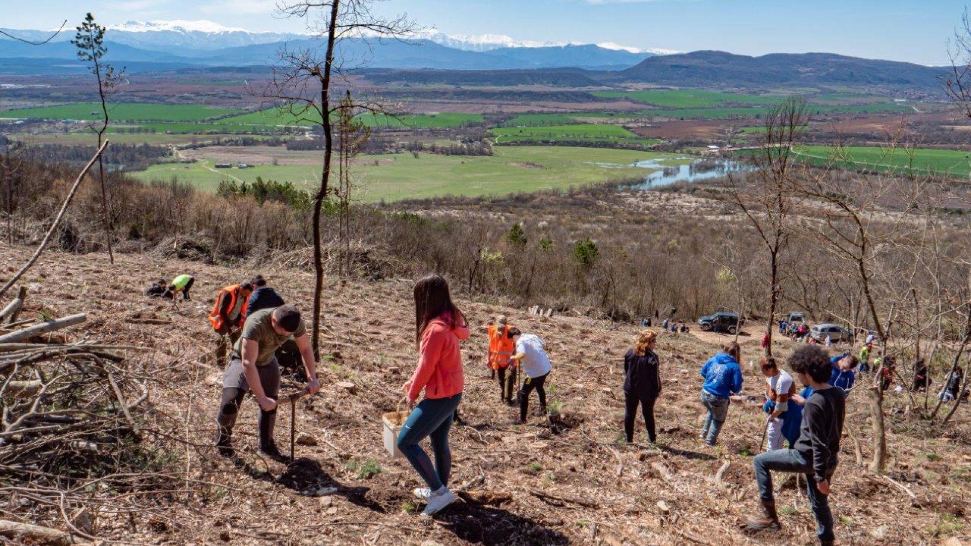 """14 000 дръвчета бяха засадени край Севлиево в кампанията """"Засади дърво, създай бъдеще"""""""