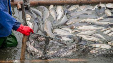 Рибата остава проблем след Брекзит: Водите на Обединеното кралство остават затворени