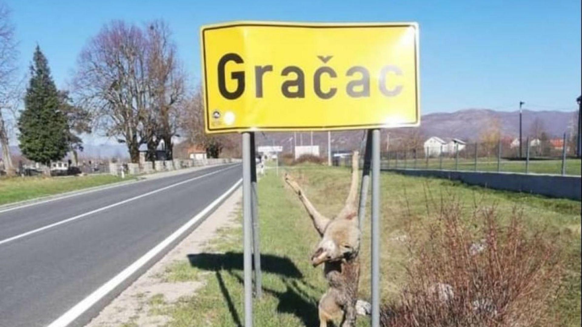 Убит вълк, провесен на табела на хърватски град, предизвика остър спор