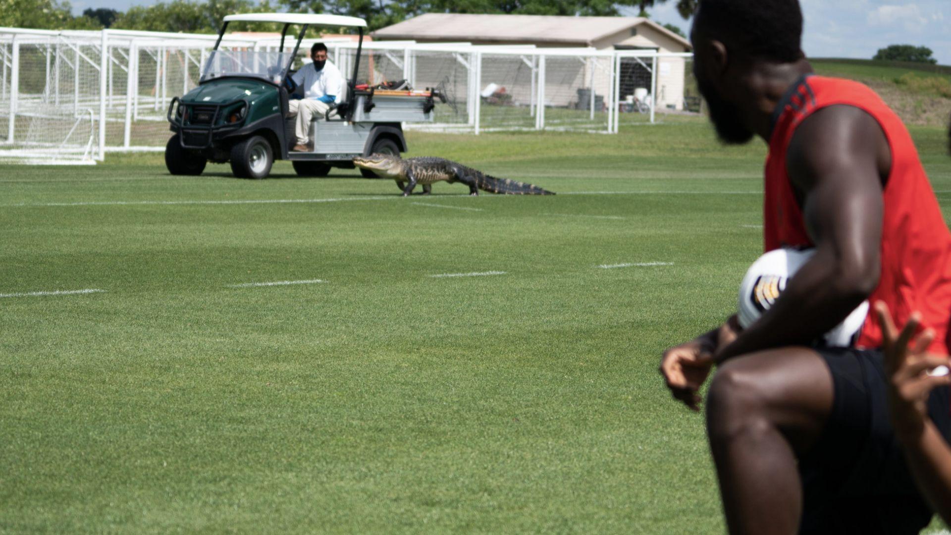 Алигатор прекъсна тренировката на футболен отбор в Щатите