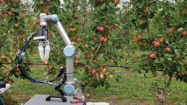Робот бере ябълки: по една на 7 секунди