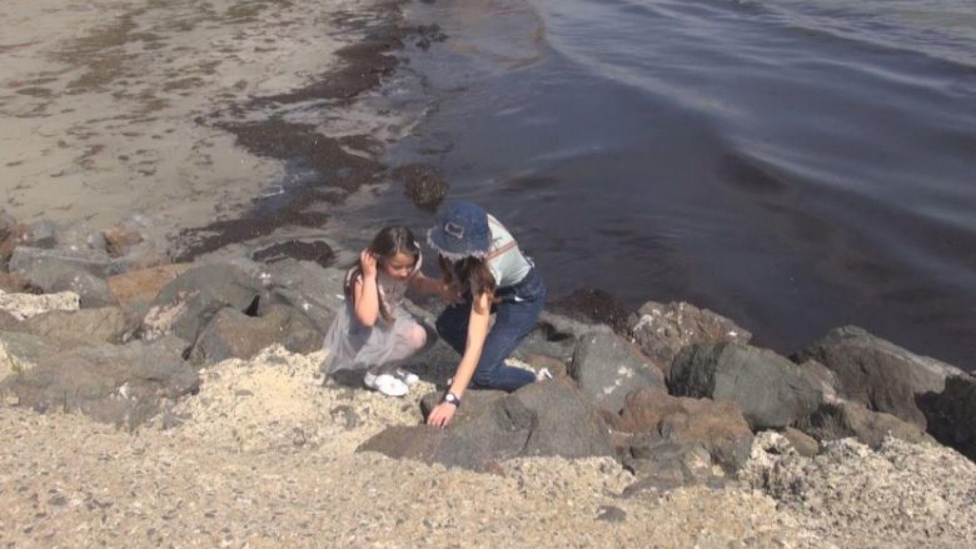 Второкласничка от Поморие откри скъпоценен камък на 50 млн. години