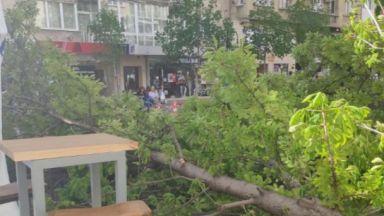 """Огромно дърво падна върху маси на заведение на столичния бул. """"Витоша"""""""