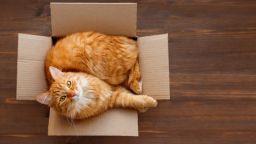 Котките обичат да се настаняват не само в истински, но и във въображаеми кутии