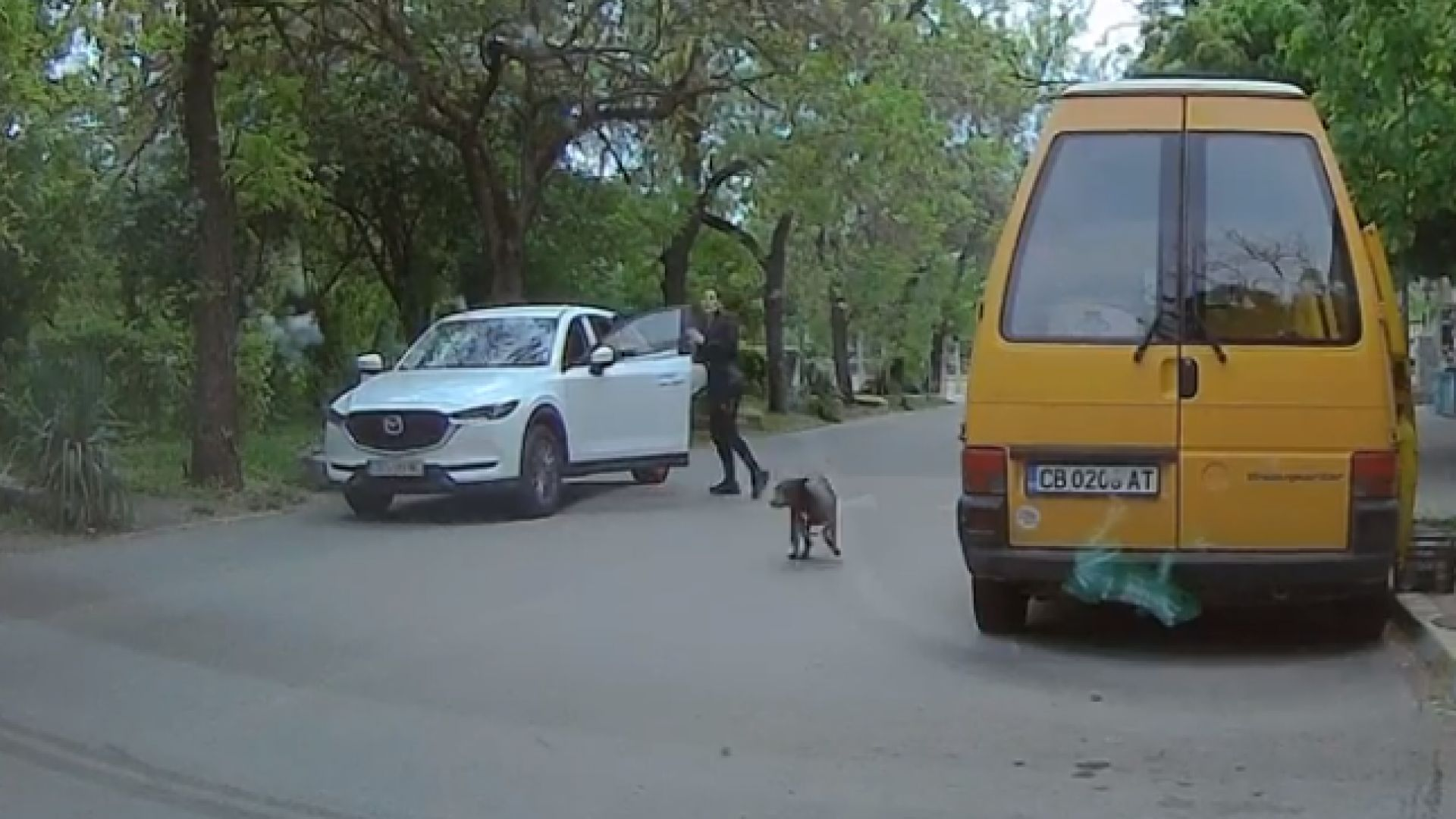 Заснеха как стопани изхвърлят кучето си на столична улица (видео)