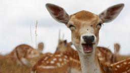 Животните също могат да се смеят