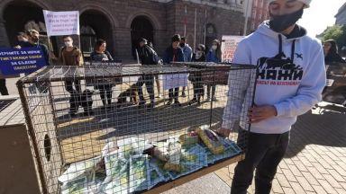 Протест срещу фермата за норки посрещна новите министри