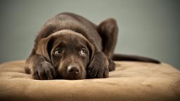 """Доказано: Хората могат да """"заразяват"""" кучетата със стрес"""