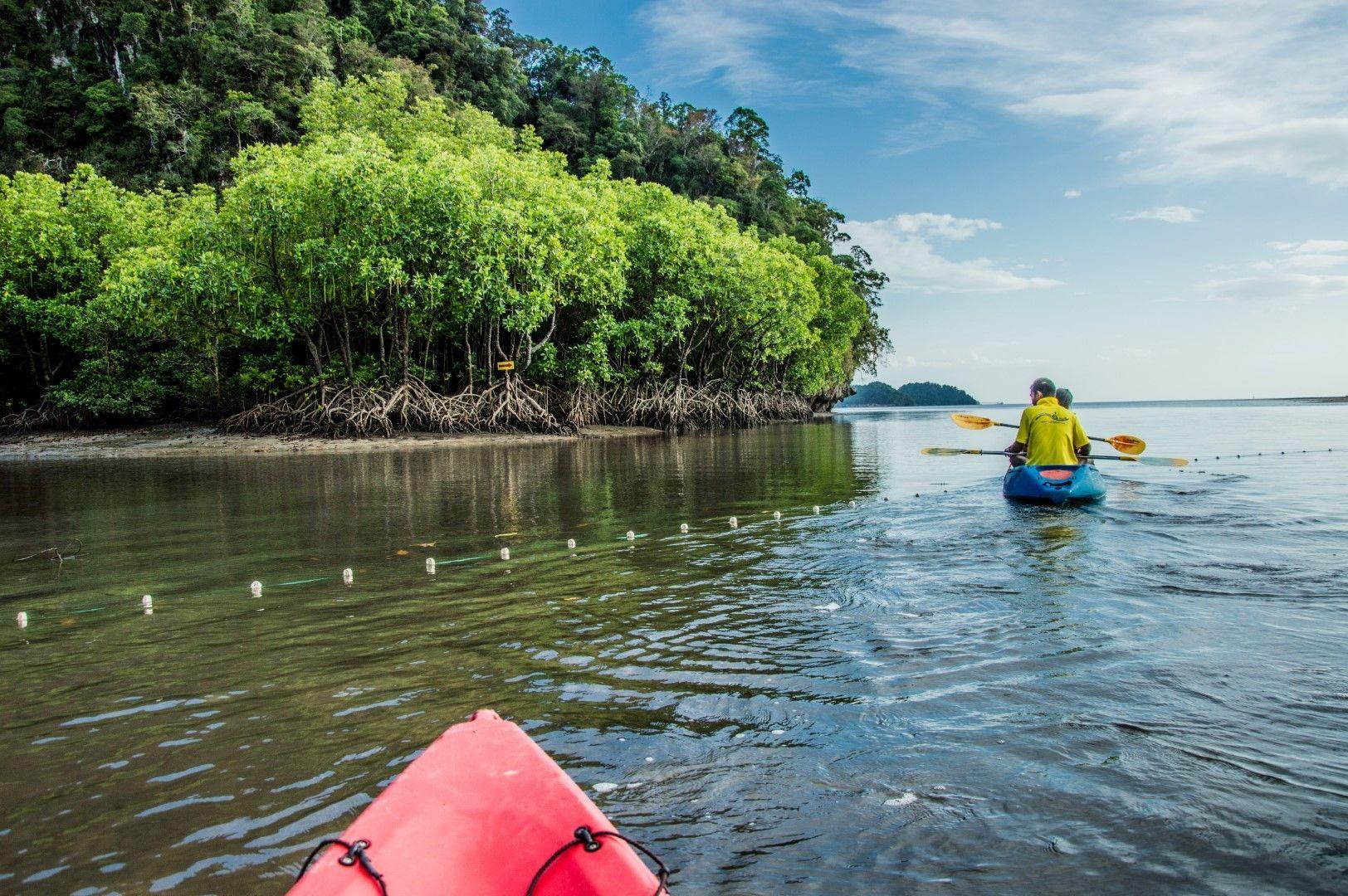С каяк край мангровите гори край Краби, Тайланд