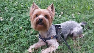 Питбул уби малко куче до столично училище, издирват стопанина, който избягал