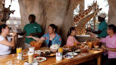 Да закусваш в компанията на жирафи в Абу Даби (видео)