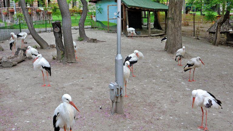 Над 20 са щъркелите, които обитават варненския зоопарк. Повечето птици